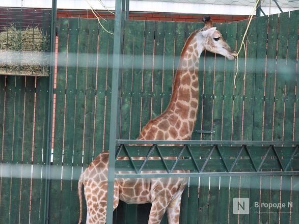 Выжить в пандемию: что происходило в закрытом зоопарке «Лимпопо» - фото 38