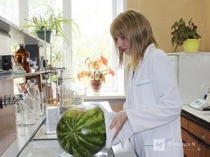 Полосатый рейд: нижегородский Роспотребнадзор исследует арбузы