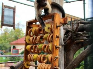 Нижегородские первоклашки смогут бесплатно посетить зоопарк «Лимпопо» 1 сентября