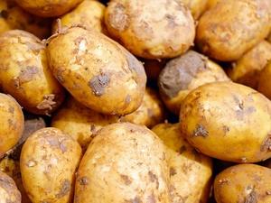 Картофель и морковь подешевели в Нижегородской области