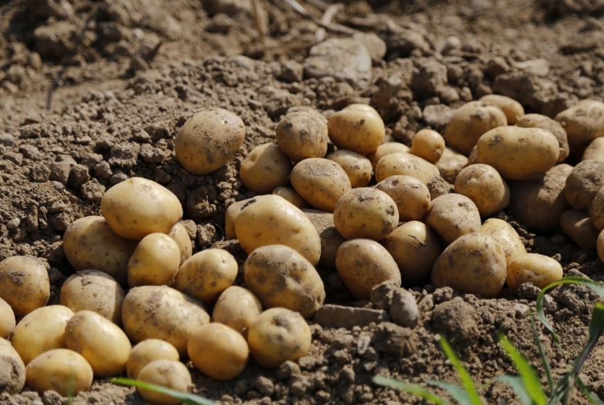 Урожай 2019 года в Нижегородской области превысил прошлогодние показатели  - фото 1