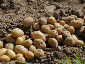 Урожай 2019 года в Нижегородской области превысил прошлогодние показатели
