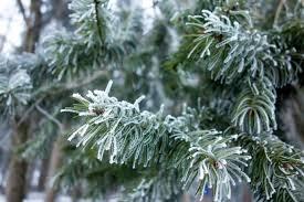 В новогоднюю ночь в Нижнем Новгороде ожидается слабый мороз и снег