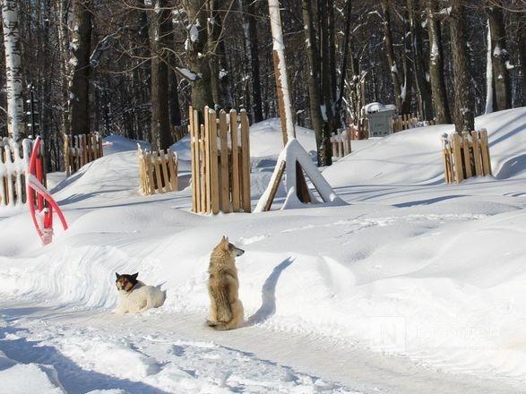 748 бездомных собак отловили в Нижнем Новгороде в 2020 году - фото 1