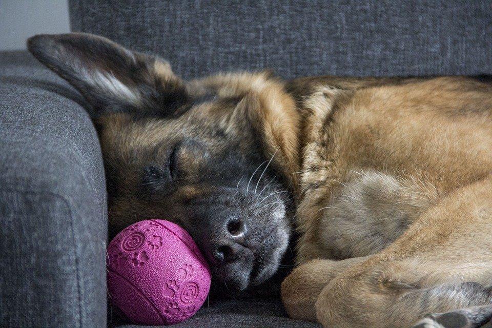6 причин, почему каждый человек обязательно должен спать днем - фото 3
