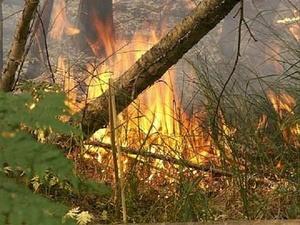 В 20 районах Нижегородской области запрещено посещать леса