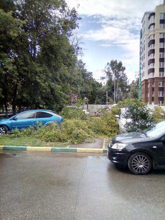 Машины завалило деревьями после урагана в Нижегородской области - фото 6