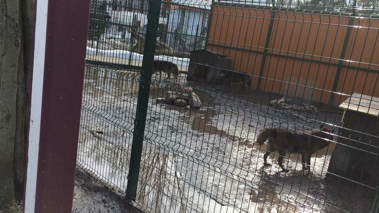 Вольер с волками затопило в балахнинском зоопарке - фото 3