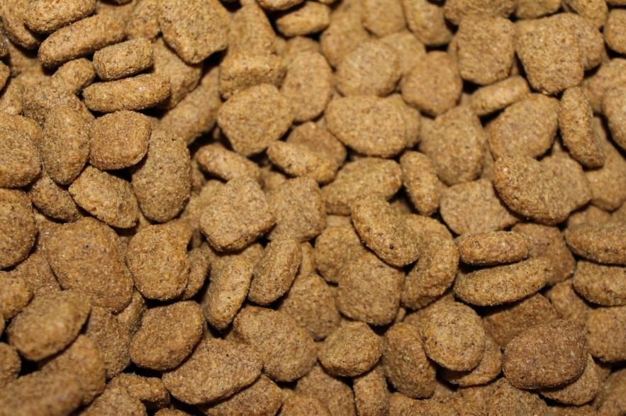 В Роскачестве назвали марки худшего сухого корма для собак - фото 3
