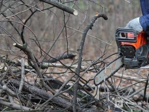 88 фактов незаконной рубки леса выявлено в Нижегородской области с начала года