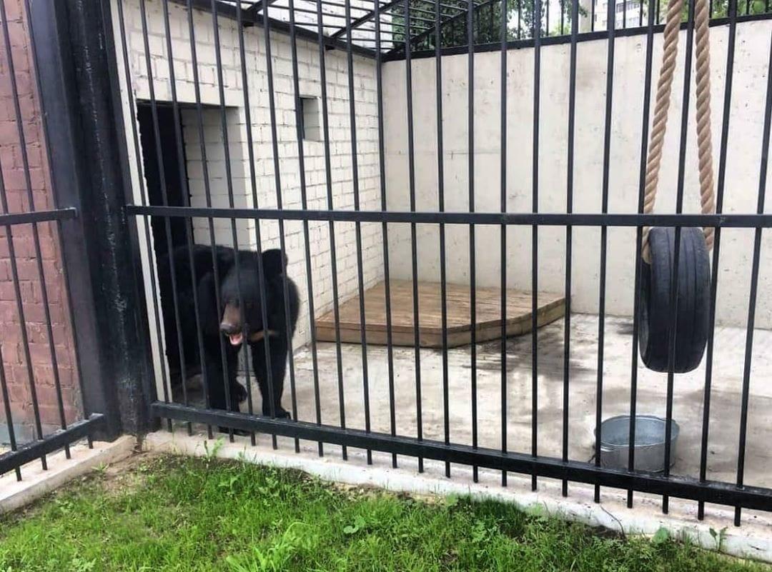 Гималайский медведь поселился в нижегородском зоопарке «Лимпопо» - фото 1