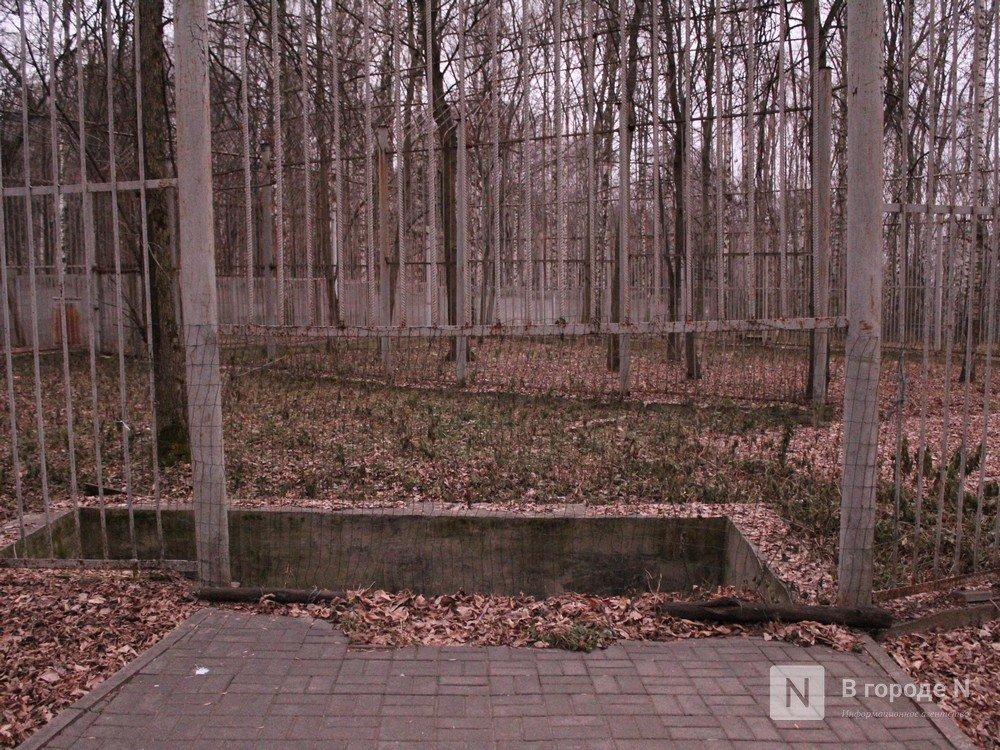 Чем живет «Мишутка»: репортаж из закрытого нижегородского зоопарка - фото 9