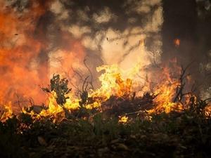 В выходные в Нижегородской области прогнозируется пятый класс пожароопасности лесов