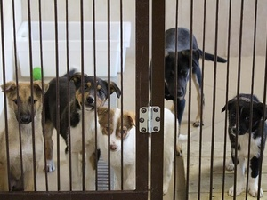 Бездомных животных в Нижегородской области поместят в приюты на период ЧМ-2018