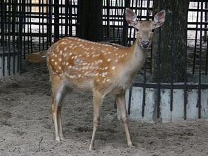 Первая площадка нижегородского зоопарка «Лимпопо» открывается после долгого ремонта