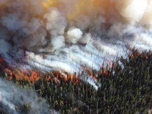 Высокая пожароопасность лесов отмечается в Нижегородской области