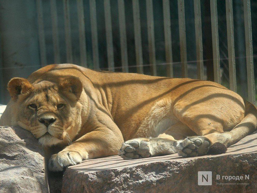 Центр реабилитации животных могут создать в Нижнем Новгороде - фото 1