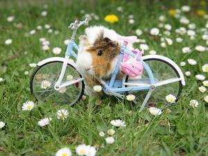 Молодого арзамасца будут второй раз судить за кражу велосипеда у детей